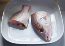 rybi surowy Zdjęcie Stock