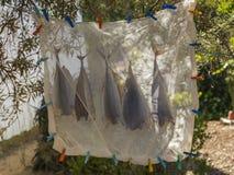 Rybi suszarniczy outside ochraniający lekkim kawałkiem materiał zdjęcie royalty free