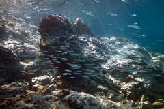 rybi tłum Obraz Royalty Free