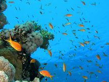 rybi tłum Fotografia Royalty Free