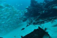 Rybi tłum przy podwodnym wrakiem Fotografia Royalty Free