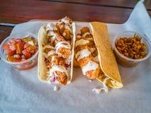Rybi tacos z salsa i ryż zdjęcia royalty free