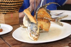 rybi talerz Obraz Royalty Free