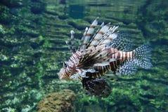 rybi tropikalny Fotografia Stock