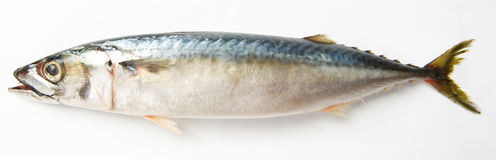 rybi tuńczyk Obraz Stock