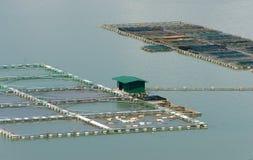 Rybi uprawiać ziemię, rybi zbiornik, daklak, Wietnam Fotografia Royalty Free