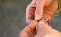 rybi zahaczanie Zdjęcia Royalty Free