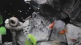 Rybi zbiornik zdjęcie wideo