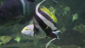 Rybi zbiornik Lub akwarium zbiory