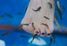 Rybi zdroju pedicure i stopa rybi zdrój Zdjęcia Stock
