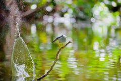 Rybi zjadacz jest ptakiem znajdującym blisko rzek zdjęcie royalty free
