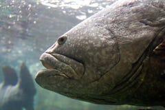 rybia ampuła Zdjęcia Royalty Free