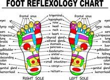 Rybia anatomia, ilustracja Fotografia Royalty Free