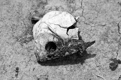 rybia czaszka zdjęcie royalty free