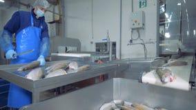 Rybia fabryczna jednostka z męskim pracownikiem rozszczepia ryby zbiory