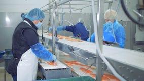 Rybia fabryka Pstrągi przepasują dostają przetwarzali fabryka personelem zdjęcie wideo