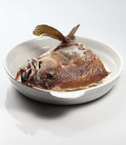 rybia głowa Obraz Stock