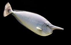 rybia jednorożec Fotografia Royalty Free