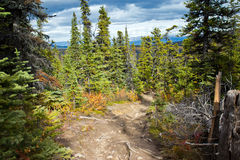 Rybia Jeziorna ślad podwyżka, Whitehorse, Yukon spadku sceneria Fotografia Royalty Free