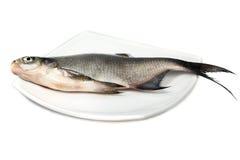 rybia leszcz rzeka obraz stock
