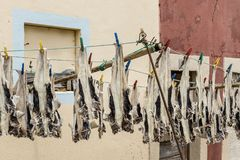 Rybia osuszka w na wolnym powietrzu Obraz Stock
