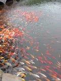 RYBIA ryba ryba Zdjęcie Stock