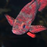 rybia skała Fotografia Stock