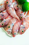 rybia surowa czerwień Obraz Royalty Free
