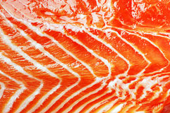 rybia tło czerwień Obrazy Stock