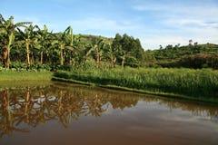 Rybiego gospodarstwa rolnego staw w Uganda, Afryka Zdjęcie Royalty Free
