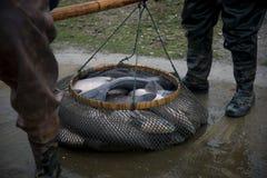 Rybiego stawu połów obraz stock