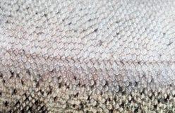 Rybiej skala zakończenie rybi Fotografia Royalty Free