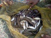 rybołówstwo obrazy royalty free