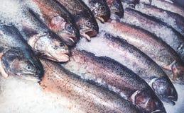 rybołówstwo Zdjęcia Stock