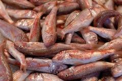 ryby świeże fotografia royalty free