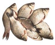ryby świeże Zdjęcia Royalty Free