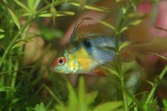 ryby Zdjęcie Stock