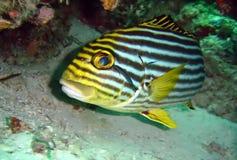 ryby Obrazy Stock