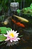 ryby jeziora zdjęcie stock