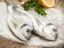 ryby leszcza głowę pozłacany morza Obraz Stock