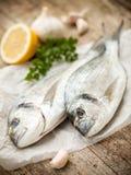 ryby leszcza głowę pozłacany morza Zdjęcie Stock
