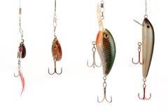 ryby pokusę Zdjęcia Royalty Free