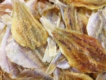 ryby suszone Fotografia Stock