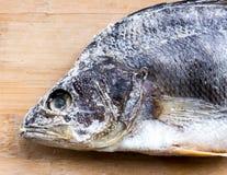 ryby suszone Zdjęcia Stock