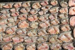 ryby suszone Obraz Stock