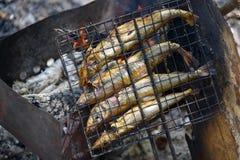 ryby z grilla Obraz Royalty Free