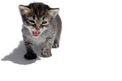 ryczący kota fotografia stock