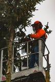 RYCZYWOL, POLÔNIA - 18 de fevereiro de 2017 - árvore do corte do lenhador com uma serra de cadeia Imagens de Stock Royalty Free
