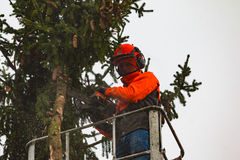 RYCZYWOL, POLÔNIA - 18 de fevereiro de 2017 - árvore do corte do lenhador com uma serra de cadeia Foto de Stock
