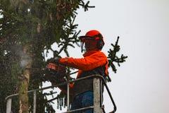 RYCZYWOL, POLÔNIA - 18 de fevereiro de 2017 - árvore do corte do lenhador com uma serra de cadeia Fotografia de Stock Royalty Free